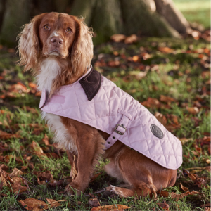 A Spaniel wearing a Barbour Quilted Dog Coat in Pink