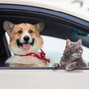 A dog and a cat sitting in a car with the window wide open